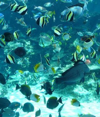 熱帯魚~1.JPG